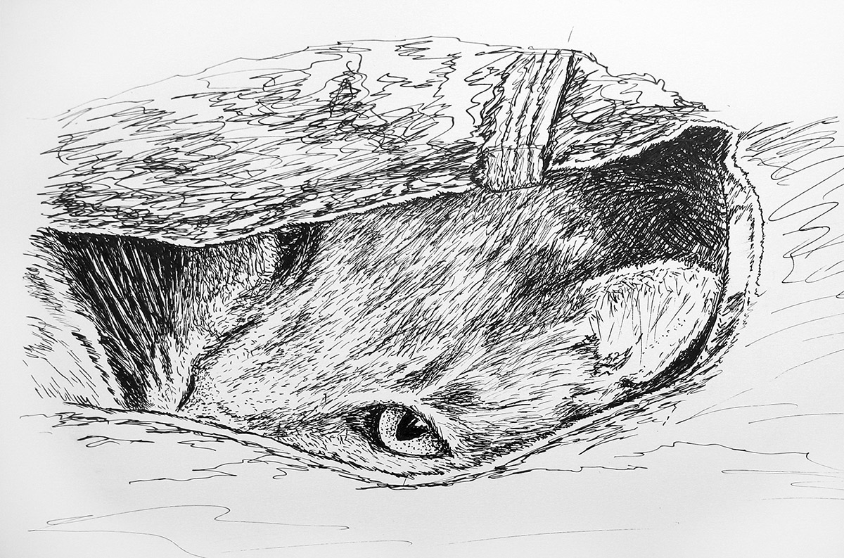 pen finesketch cat carltonarts